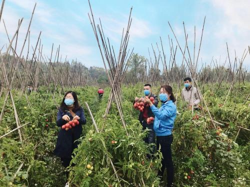 Công đoàn Sở Công Thương chung tay giải cứu nông sản trên địa bàn tỉnh